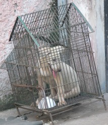 How much is that doggie in the . . . bird cage ??