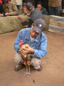 Between rounds, the owner grooms his bird and gives him a few good tips and some gentle encouragement. 'Come on baby, you can do it !!' Held in Hanoi as part of a festival on Nguyễn Khắc Hiếu, Trúc Bạch, Ba Đình, Hà Nội, Vietnam.