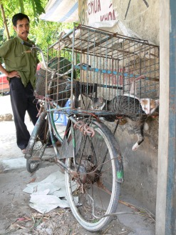 Cat seller, cats sold for meat - his man was worried I might let his cats out, these moggies are sold for meat. This really pushes many culture shock buttons when I see this, my heart goes out to these cats but this is their culture and something I cannot judge. Hanoi, Vietnam.