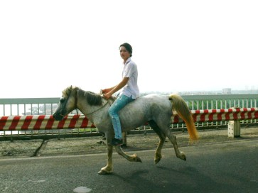 Guy riding a pony not sure where this guy is going but he was on Thang Long Bridge, Hanoi going over the Red River on the way out to the airport.