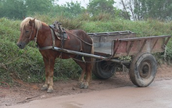 Even though this is slowly dying out ponies are still used as work horses in Vietnam. Ponies are great as they are strong and normally very eager to work. This guy is having a quick sleep while the boss is away. In 2010 I would only occasionally see a pony on the streets working and mostly when out of town.