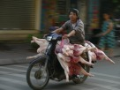 Five pig carcasses making their way to a market on early morning; pre-2007 helmet law, Hanoi, Vietnam.