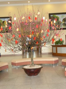 Potted peach blossom tree to celebrate Tet in Hanoi Towers foyer, Hanoi, Vietnam.