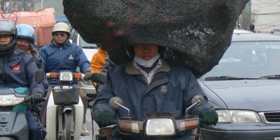 Motorbike in Hanoi, Vietnam has 2 large trees and cover has fallen over his eyes . . .I am not sure what is worse ?? 1. that he has 2 very big heavy kumquat trees on board or 2. that he can't see ??