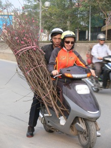 Vietnamese lady is pleased with peach blossom.