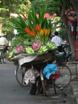 Flower bicycle vendor's display of large flowers including Lotus. She/he sells straight to your door, and also parks up in the same location, so passerby and locals come to purchase. These beauties are brought in the early morning flower market (Cho Quan An - Flower Market) and sells until all are sold then she/he can bike home.