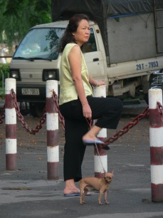 Come on Phee Phee, do your exercises !! Vietnamese lady uses the chain of a barrier to stretch and exercise her legs while tiny dog waits.