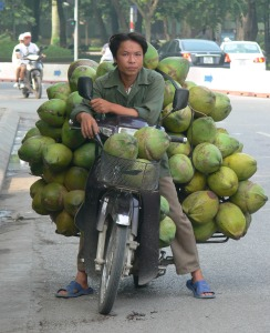 A Vietnamese man stops for a break with his delivery of a massive bunch of coconuts.