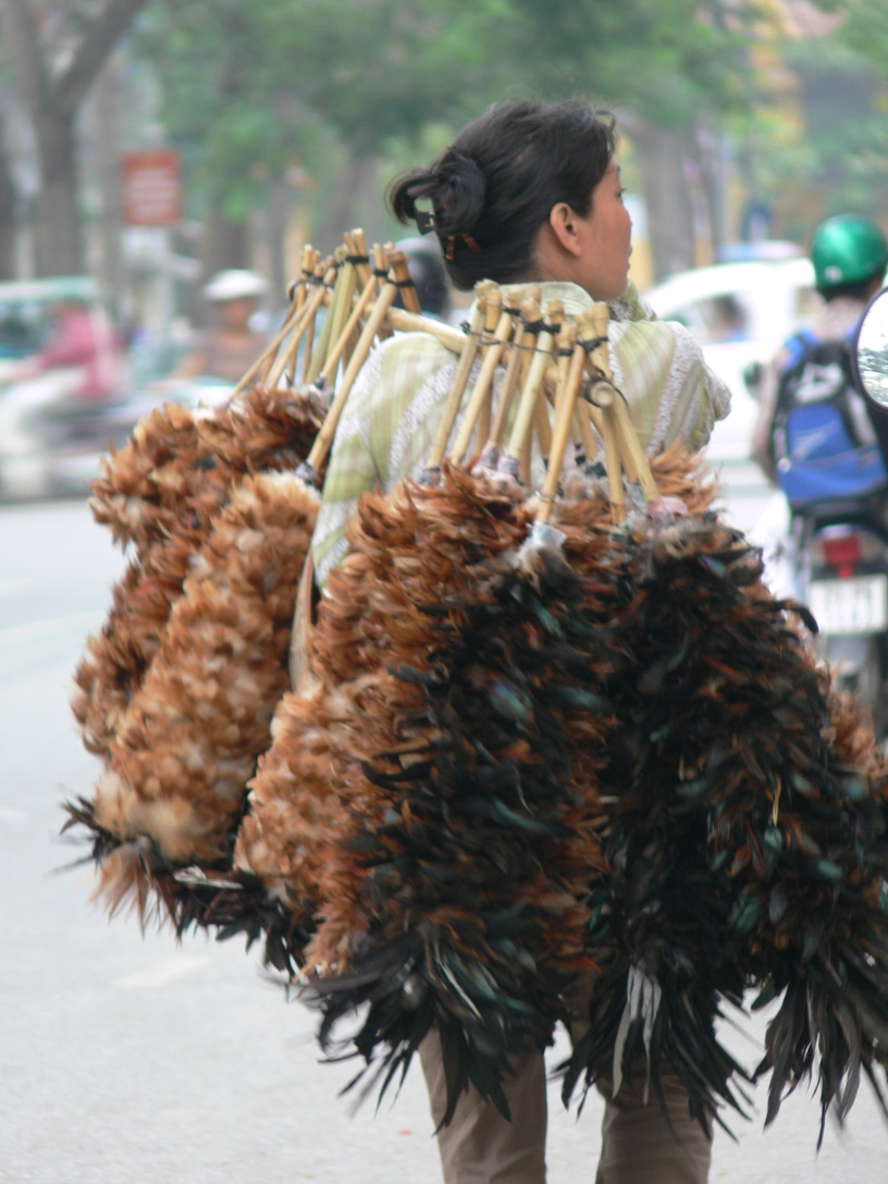 Vietnamese street vendor carries a bamboo stick with 20+ real feather dusters for sale.