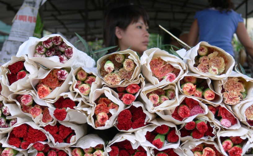 Carnation Girl - Hanoi Flower Market or Cho Quảng An.