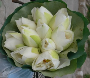Beautiful white lotus wait to be sold wrapped in water Lilly leaves are almost opening up in Hanoi Flower Market or Cho Quan An.