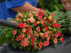 Miniature roses, my favorite !! Hanoi Flower Market / Cho Quảng An..